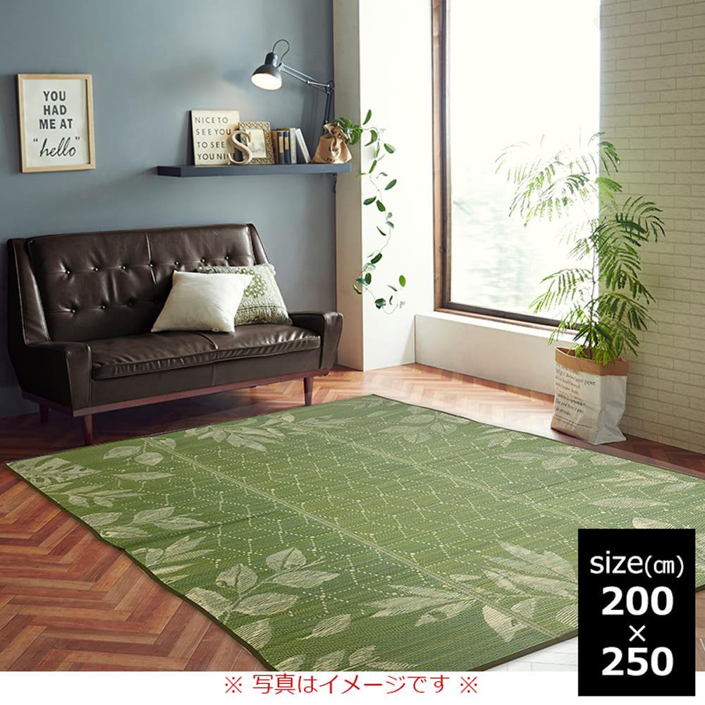 い草ラグ NSPレスター 200×250 GN:さらっと快適、い草素材