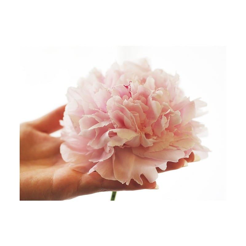 【母の日フラワーギフト 送料込み】花束「シャクヤク」